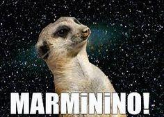 suricate seboso - Pesquisa Google
