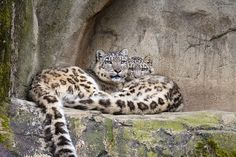 Mother and son by Cloudtail on Flickr.