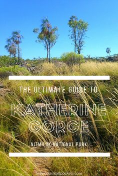 The Ultimate Guide to Australia's Katherine Gorge : Nitmiluk National Park {Big World Small Pockets}