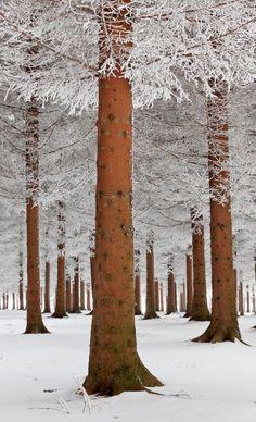 "seasonalwonderment: ""Snow Falls Softly """