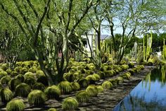 Sunnylands California | Nowness & House & Garden 'Great Gardens' (houseandgarden.co.uk)