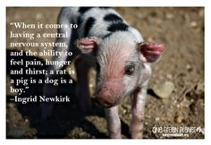 When it comes to having . . . | Ingrid Newkirk