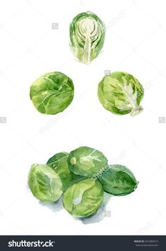 Brussels sprouts isolated on a white background. Watercolor food illustration.