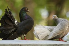 Grandfather's Pigeons by Draggor-Lecanth on deviantART
