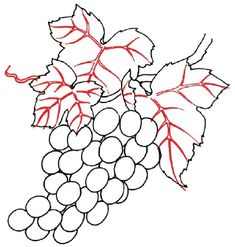 How to Draw Grapes in 5 Steps