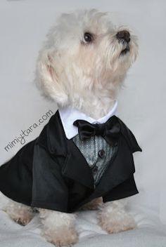 perro elegante Patrón de smoking