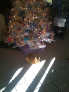 My baby, Tigger, hanging out in front of her favorite Christmas tree.