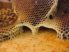 Honeycomb - the honeycomb design is stucturally the strongest in the natural world. also the best use of space. amazing
