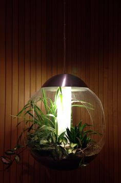 Plant lamp Green Lamp, Room Decor, Rooms, Lighting, Plants, Bedrooms, Coins, Light Fixtures, Room