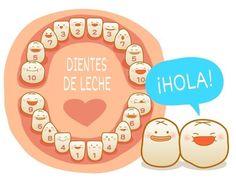 Resultado de imagen para denticion temporal