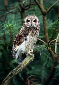 Owl, Вика Иванова