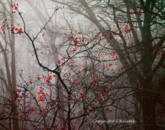 Foggy Forest Photograph Tree Wall Art Misty Fog Lit Forest With Red Berry Branches Surreal Nature Landscape 10x8