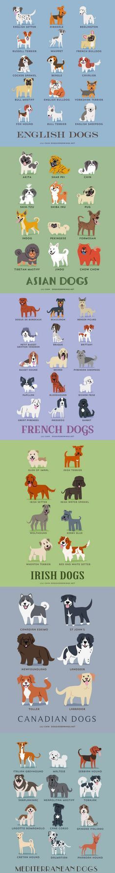 Dogs Of The World. Didn't realize how many dogs there were...wow!