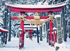 Japan images. © Glenn Waters. Happy New Year's Day 2010. 明けましておめでとうございます。Over 18,000 visits to this photo. | Flickr - Photo Sharing!