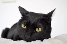 ふあふあ・・・の画像 | 黒猫ブログ ライト&ソラと 暮らす幸せな毎日