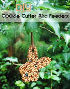 diy cookie cutter bird feeders hanging Diy Cookie Cutter, Diy And Crafts, Crafts For Kids, Bible School Crafts, Crazy Kids, Craft Club, Craft Night, Projects For Kids, Project Ideas