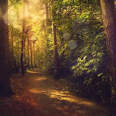 Marta Orlowska › Portfolio › woods