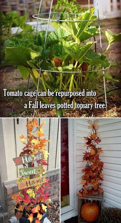 Tomato cage get new life in charming autumn, it can be repurposed into a Fall leaves potted topiary tree. Tomato Cage Diy, Tomato Cage Crafts, Tomato Cages, Fall Pumpkin Crafts, Fall Pumpkins, Fall Crafts, Fall Topiaries, Topiary Trees, Halloween Flowers