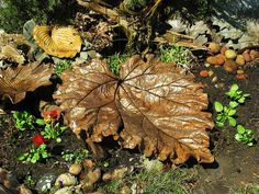 I replaced the damaged Castor bean leaf with this Huge rhubarb leaf I made a couple of years ago. Concrete Crafts, Concrete Art, Concrete Casting, Outdoor Crafts, Outdoor Projects, Garden Crafts, Garden Projects, Concrete Leaves, Pergola