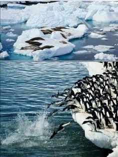 Waves, Outdoor, Antarctica, Outdoors, Outdoor Games, Outdoor Living, Wave