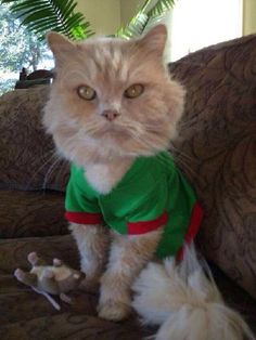 Cat wearing a green sweater with red trim Cat Sweaters, Green Sweater, Cute Cats, Haha, Kitty, Red, Animals, Pretty Cats, Little Kitty
