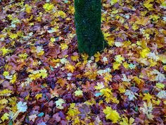 Autumn My Photos, Autumn, Painting, Image, Art, Scouts, Art Background, Fall Season, Painting Art