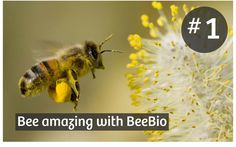 7 Reasons to add the Power of Bees to your Skincare #1