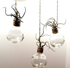 Hanging Glass Terrarium With Crazy Bulbosa Air by airyobsessions, $14.50