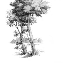 Tree by lisiCat on DeviantArt Tree Drawings Pencil, Pencil Trees, Art Drawings, Landscape Sketch, Landscape Drawings, Forest Drawing, Drawing Trees, Still Life Sketch, Pine Tree Art