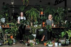 Move Over Fiddle Leaf Fig – These New Indoor Plants are all the Rage Self Watering Pots, Floating Garden, Plant Covers, Pinterest Garden, Budget Patio, Fiddle Leaf Fig, Ceramic Pots, Plastic Pots, Large Plants
