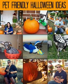 Check out our roundup of Pet Friendly Halloween ideas including crafts, things to do, dog treat recipes, DIY pet costumes, and more! Happy Halloween! Crafty Ideas Chihuahua Silhouette Pumpkin DIY Cat Masquerade Pumpkin Dollar Tree Glam Pumpkins Free Pet Pumpkin Carving Patterns & Ideas Ghost Dog Toy Tutorial Things to Do Pet Friendly Fall Activities Fall …
