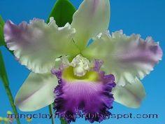 HandmadeClayFlower: กล้วยไม้แคลียาสีม่วง (1) - Handmade Clay Cattleya - Violet (1)