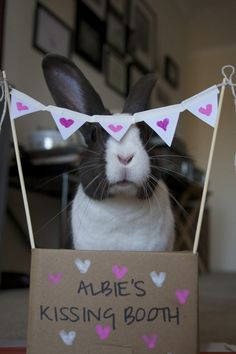 Bunny's kissing booth is open for business! - February 14, 2013