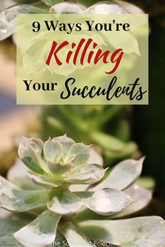 """If succulents are so easy to grow, why do mine keep dying?"" If this is you - you're not alone! Turns out, there are 9 common reasons for succulents dying, ways good-hearted gardeners like you are killing succulents, often with ""kindness"". Learn these 9 common succulent mistakes and your plants will be healthier and happier! Pin now, read later - your succulents will thank you! #succulents #succulentcare #killingsucculents #succulentsdying"