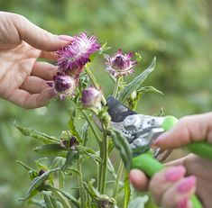 Ako zberať kvety na sušenie, aby ste ich mali čo najviac Plants, Compost, Plant, Planets