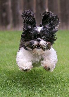 Come! Good puppy!