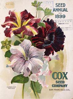 Cox Seed Company 1899 based out of San Francisco, CA Garden Catalogs, Seed Catalogs, Art Vintage, Vintage Farm, Vintage Prints, Vintage Gardening, Organic Gardening, Seed Art, Vintage Seed Packets