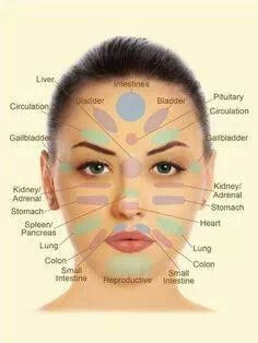 Anatomy of face skin