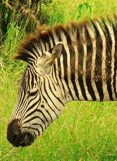 Kilimanjaro Climb, Wildlife Park, Tanzania, Safari, National Parks, Campaign, Rain, Tours, Content