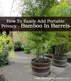 How To Easily Add Portable Privacy - Bamboo In Barrels