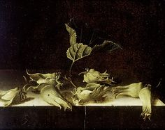 Adriaen Coorte (active 1683 - in or after 1707) - Still Life with Hazel-nuts, 1696. The Ashmolean Museum of Art and Archaeology, Oxford