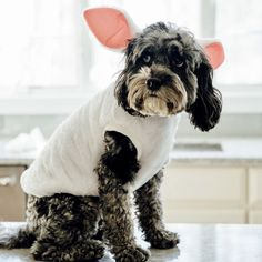 Sheldon, a Old Cockapoo, dressed as a bunny for Easter and shares his version of the movie, A Christmas Story. Visit My Dog Bake Shop to learn more. A Christmas Story, Easter, Treats, Sweet Like Candy, Goodies, Easter Activities, Snacks, Sweets