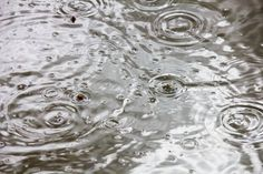 water bubbles and circles are not formed by the rain that falls from above, from below are caused by fish trying to survive drought and jump out of the water.