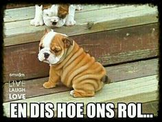Puppy Pictures Of The Cutest Pups In The Doggie Kingdom A cute wrinkly Bulldog puppy! Don't you just love those wrinkles?A cute wrinkly Bulldog puppy! Don't you just love those wrinkles? Cute Baby Animals, Animals And Pets, Funny Animals, Animal Babies, Cute Puppies, Cute Dogs, Dogs And Puppies, Doggies, Baby Dogs