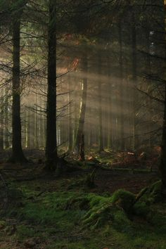 Forest Stump ; Light Rays, Exmoor, Somerset, UK - (by EmPhoto.)