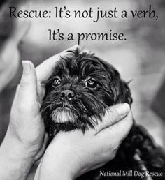 Rescue: It's not just a verb . . .