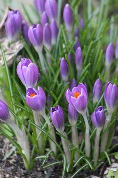 Der Frühling ist da in DA :-)