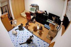 bloglosingrip - fotos engraçadas 14 - Esse quarto... ESTÁ DOMINADO!