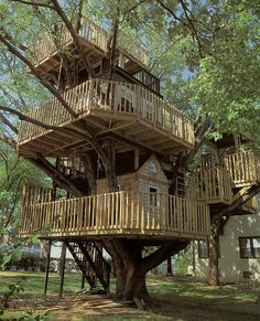 A cool tree house