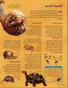 الموسوعة العلمية الميسرة لـ Internet Linked Free Download Borrow And Streaming Internet Archive In 2021 Arabic Books Quran Book Pdf Books Download